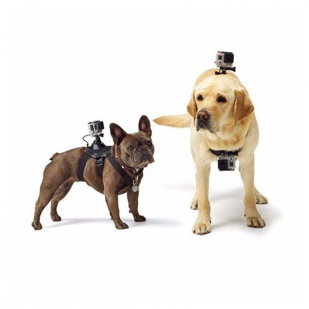 Hundsele, hundbälte med fästen för kamera